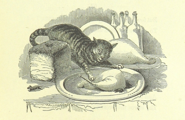 cat dishes crop