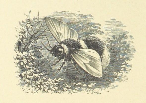 bee fairy marys dream