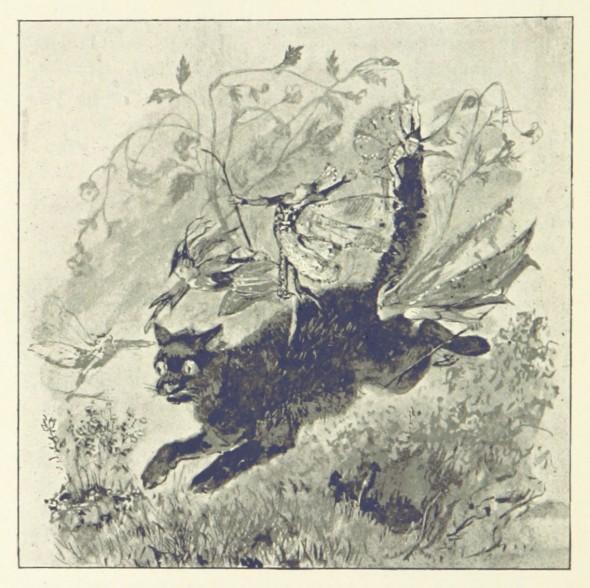 fairy cat macdonald